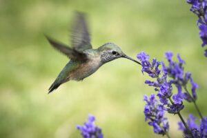 Çevrecilerin kaçınamadığı projeyi Hummingbird durdurdu