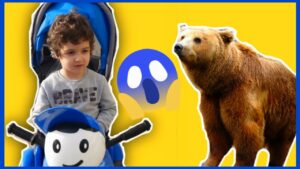 Doruk !!! Yolda Ayı Var ❗  Ayı Videoları | Eğitici Çoçuk Videoları İzle | Funny Kids Videos