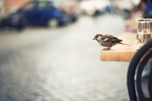 Trafik gürültüsü kuşlarda öğrenme güçlüğüne neden oluyor